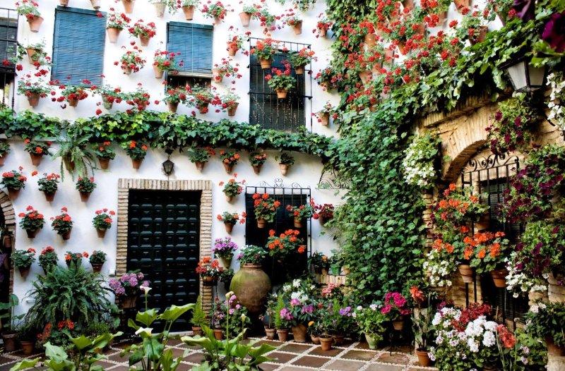 Праздники и фестивали цветов